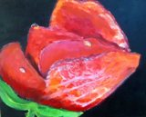 roos met dauw